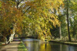 Autumn in Mottisfont 4